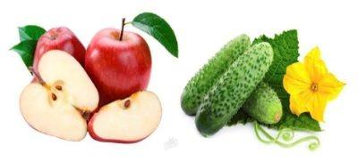 Отзывы о разгрузочных днях на огурцах и яблоках