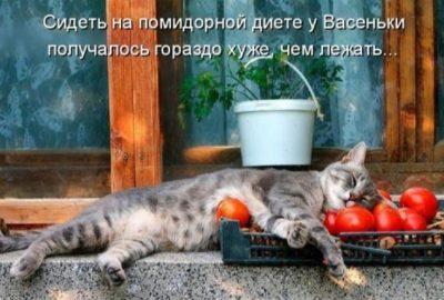 Сидеть на помидорной диете противопоказания