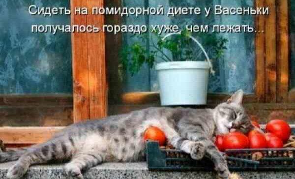 Кот спит на помидорах