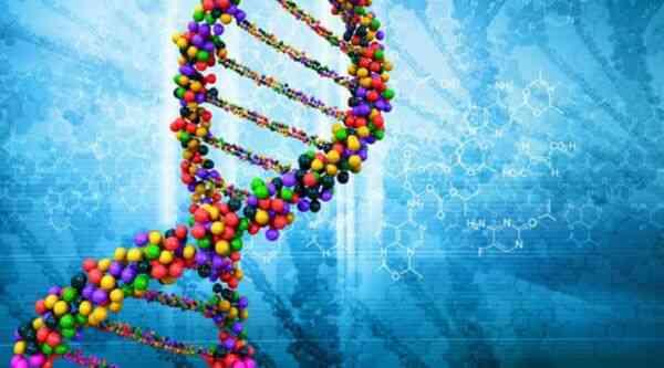 Цепочка ДНК с геном ожирения
