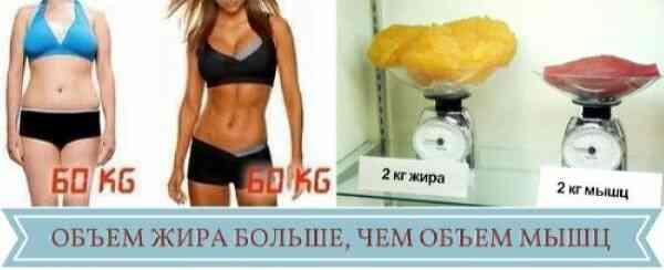 Идеальное соотношение жира и мышц
