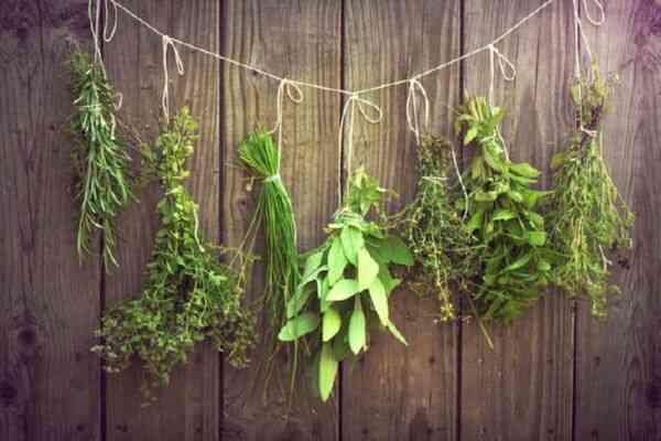 Самые полезные травы для здоровья и красоты